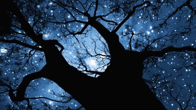 Trees-night-stars-wallpapers-HD