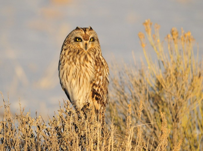This image has an empty alt attribute; its file name is beautyowl.tomkoerner.jpg